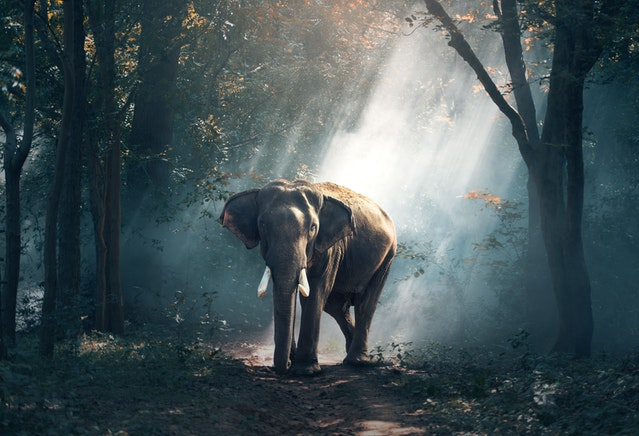 Beautiful elephant in the jungle