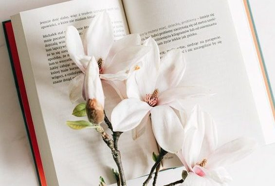 White flowers on top of open book