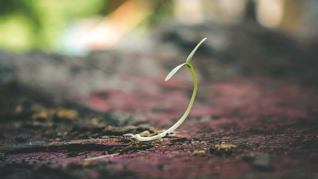 Sprout of plant growing
